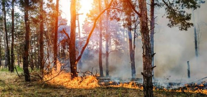 Tips for Staying Healthy During Wildfire Season